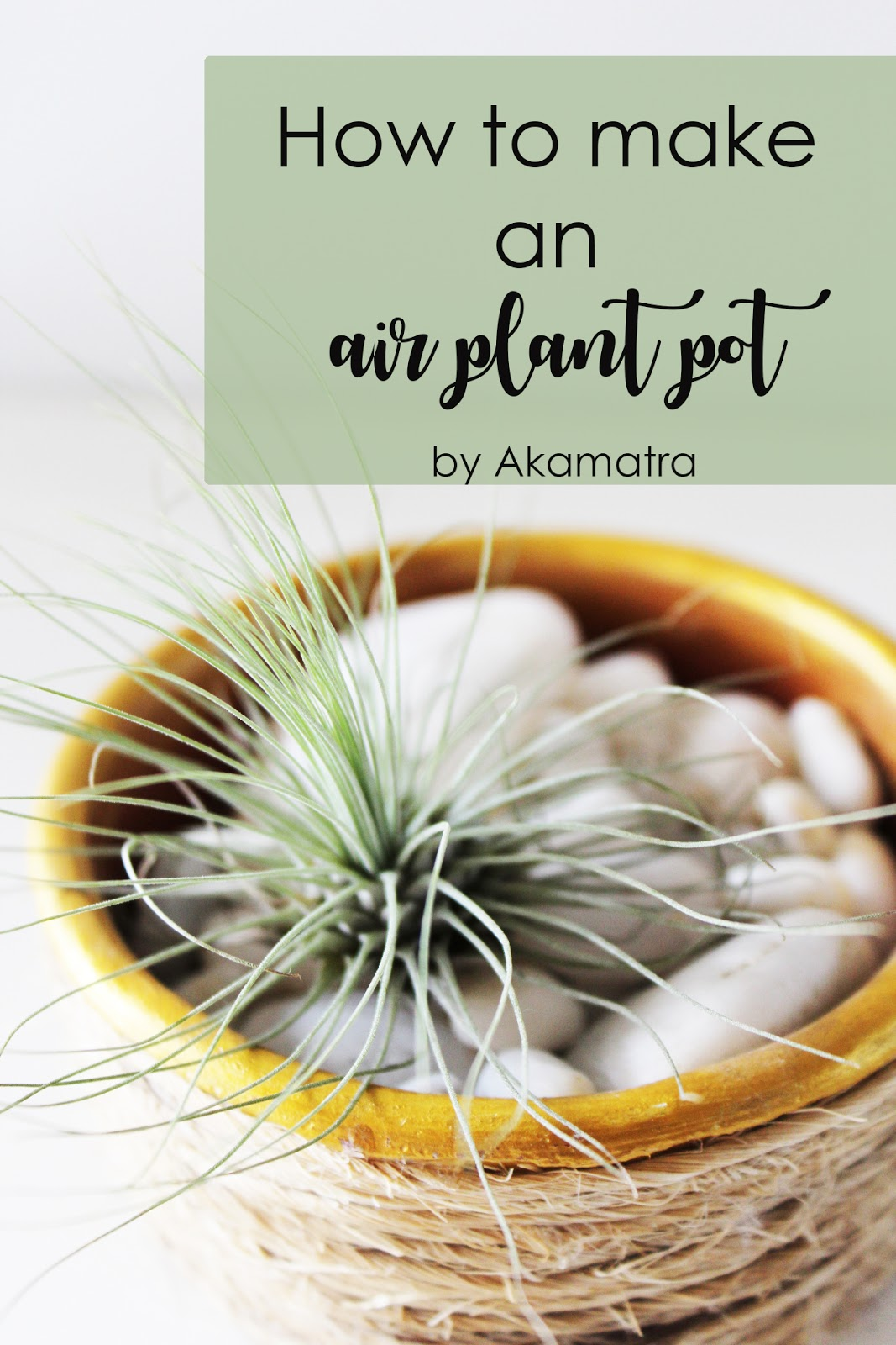 How To Make An Air Plant Pot Akamatra