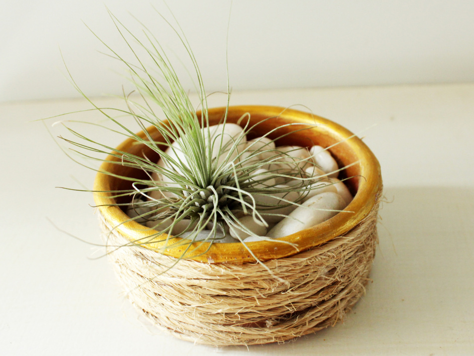 How to make an air plant pot