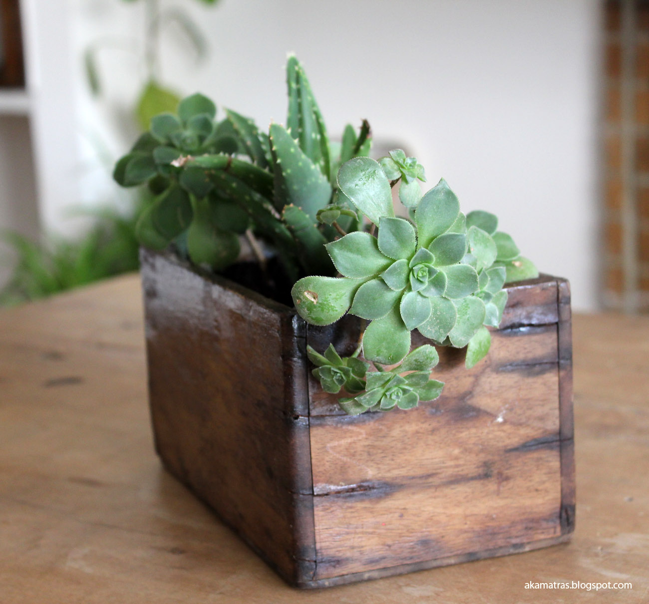 Reclaimed wooden planter for succulents - DIY